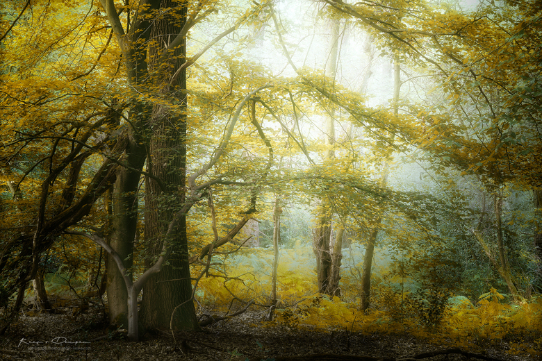 Yellow Mellow -