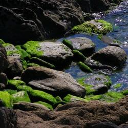 intens groen