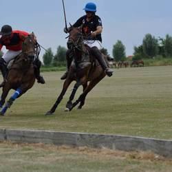 Paardenpolo