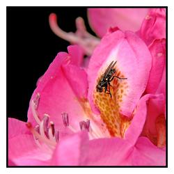 Vlieg op.... bloem