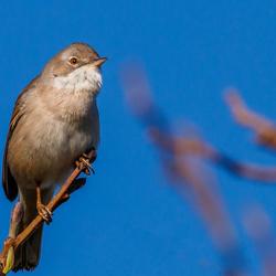 Schiermonnikoog - Ochtendvogel