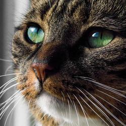 Poes met groene ogen