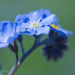 Little and blue  . . .