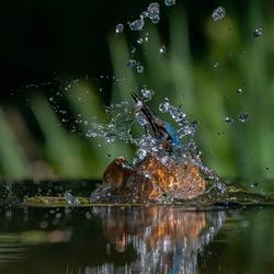 Ontworstelen aan het water.