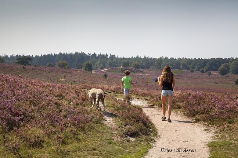 Hond uitlaten - Heerlijk de hond uitlaten in dit mooie landschap