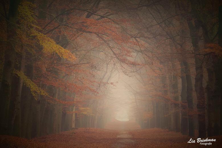 Mist - Zomaar een boslaantje in Ede, door de mist en de mooie herfstkleuren zou het ook zomaar eens een sprookjesbos kunnen zijn<br /> <br /> Bedank