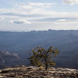 Het leven van een boompje in de Grand Canyons