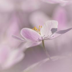 Pink Heaven...
