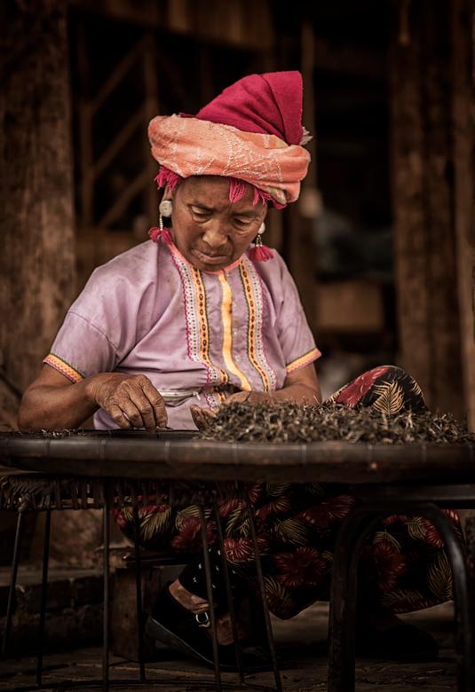 Thee sorteren - Thee sorterende Bulang vrouw in Yunnan, China