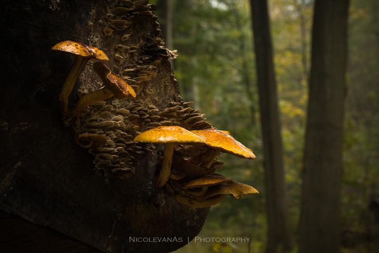 Autumn sfeer 1. - Het is enorm genieten als het Herfstseizoen gaat beginnen.  Een feestje voor de natuurfotograaf.  Een speurtocht door het bos naar d