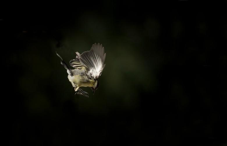 wings - eindeloos proberen ..wachten op het juiste licht ..flink de sluiter opvoeren en een nogal grote dosis geluk..pfft