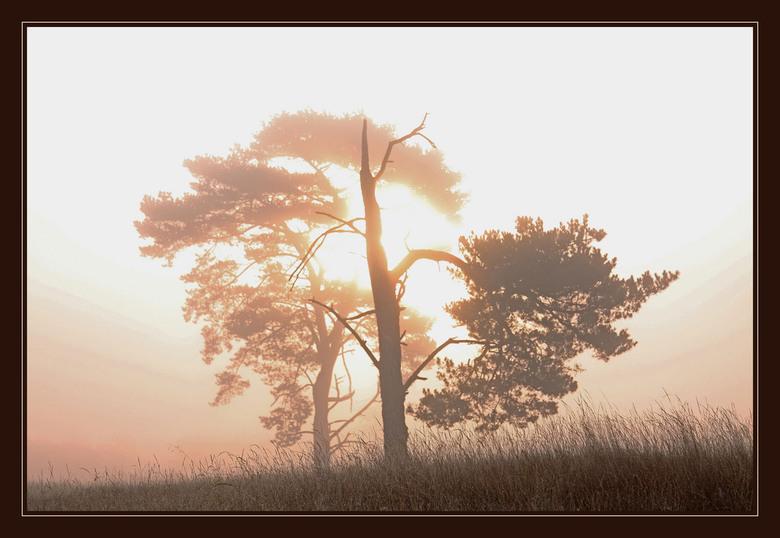 """Ochtendlicht - Zonsopkomst boven een mistige hei met kale bomen.<br /> <br /> Bedankt voor de aandacht en reacties bij <a href=""""http://gallery.zoom."""