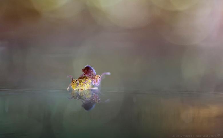 De IJdeltuiten - Ik heb vanmiddag eens even goed de springstaartjes bestudeerd maar wat een ijdeltuiten zeg!<br /> En maar kijken in de spiegel .....