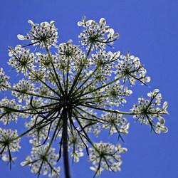 Flower star.