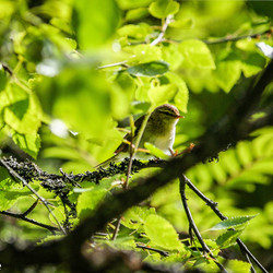 Vogel in bladeren