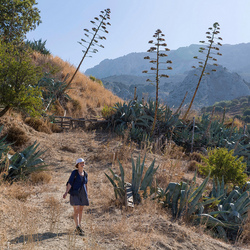 landschap met agaven