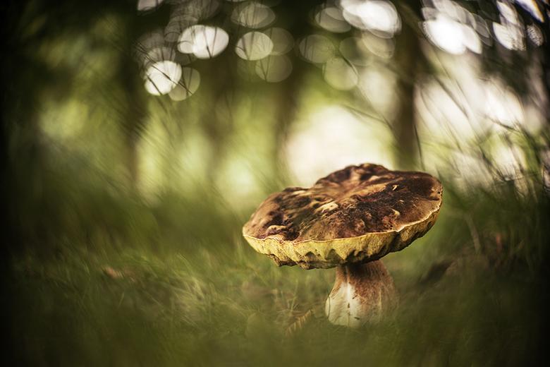 Eekhoorntjesbrood