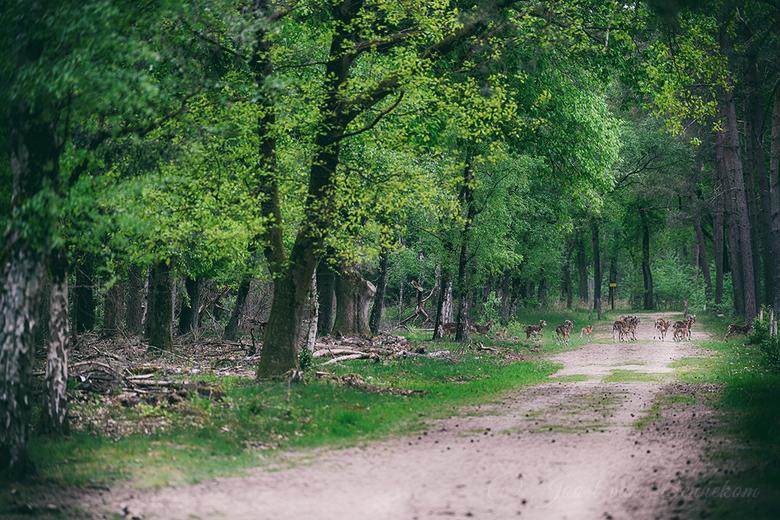 In het spoor van de Moeflon. - Bij het Wekeromse Zand kun je heerlijk wandelen in het zandverstuivingsgebied. In het bos of op de hei is de kans groot