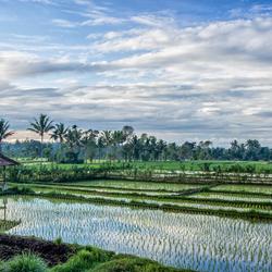 A morning at Tetebatu, Lombok (Indonesia)