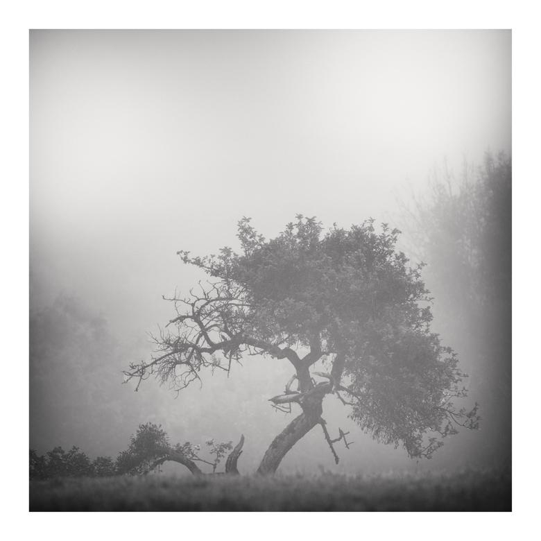 silhouets I - landschappen fotograferen in zwart wit vraagt om een andere benadering dan wanneer je kleur gebruikt. Ben me er al een tijdje in aan het