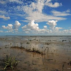 De Waddenzee...wereld erfgoed.