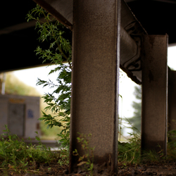 Under the bridge ...