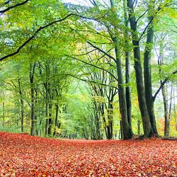Herfst Rhenen - Venendaal 6