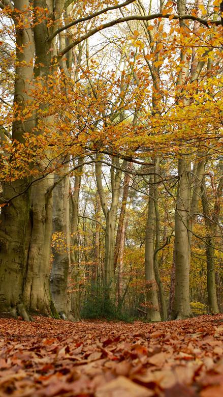 Herfst in Springendal -