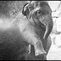 ook olifanten............