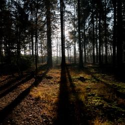 Hoge Hexel - doorkijkje bos
