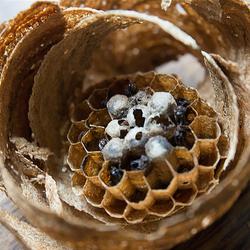 klein bijennest