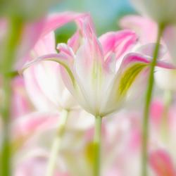 soft spring 3