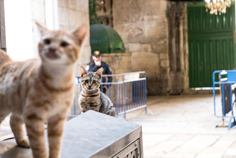 """Jeruzalem - Poezenleven - 2 katten voor de uitgang van de """"rotskoepel"""" Jeruzalem, Israël."""