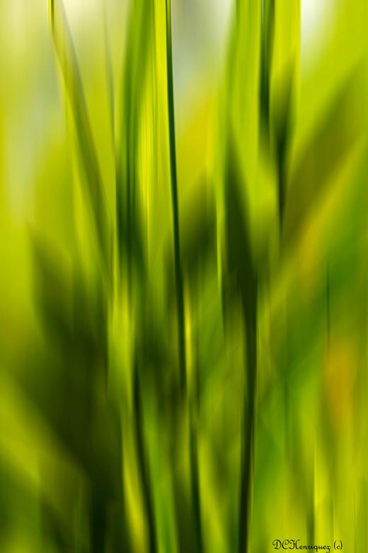 Abstract  - Even wat anders, een abstract beeld van rietbladeren.<br /> <br /> Bedankt voor de fijne reacties bij mijn vorige opname!