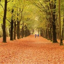 Warme herfstkleuren Rysterbosk