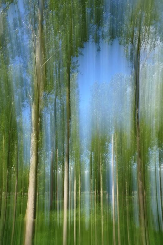 ICM forest  - Experimenteren met ICM (Intentional Camera Movement) in het bos.