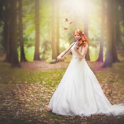 Violin fairytale