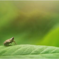 Cicade.........