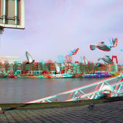 Duiven Rotterdam 3D GoPro