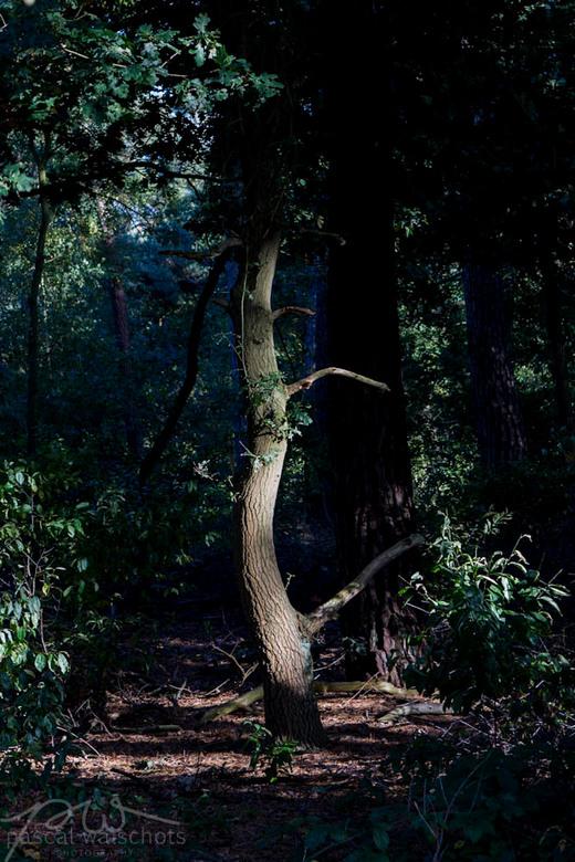 Magic Tree - Geschoten aan de IJzerenman in Vught. Met een late najaarszon had deze boom net voldoende licht voor een mooi magisch sfeertje.