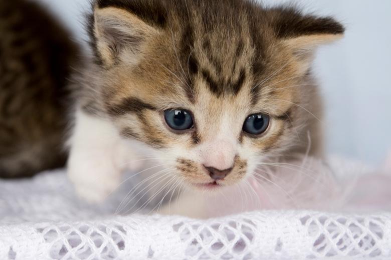 wat is daar? pt. 2 - Dit is nog een foto van de reeks die ik gemaakt heb met de kittens van 3 weken. <br /> <br /> Laat me weten wat je vind.<br />