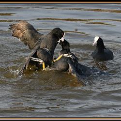 Amok in de polder (2)