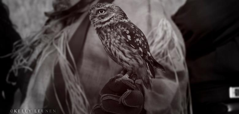 Owl - uiltje..
