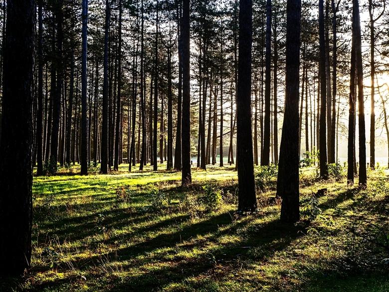 Schaduwen - Een wandeling in het bos met laagstaande zon