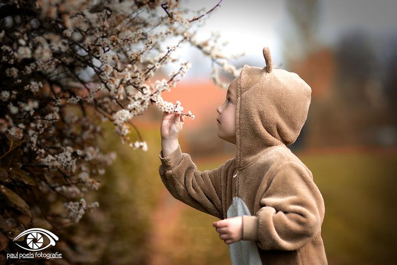 Blossom Rabbit