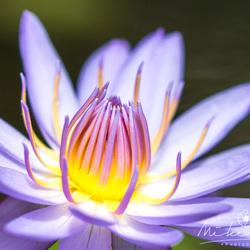 Light up the flower