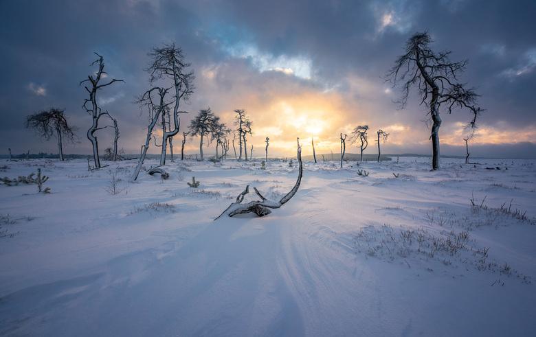 Snow and Fire - Zonsopkomst tijdens een koude ochtend bij Noir Flohay in België.
