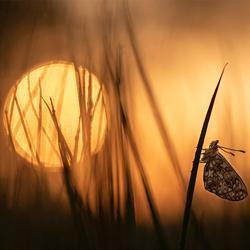 Zilveren Maan bij zonsopgang