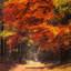 Rood en Geel in de herfst