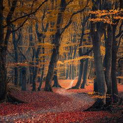 Crumbles of autumn